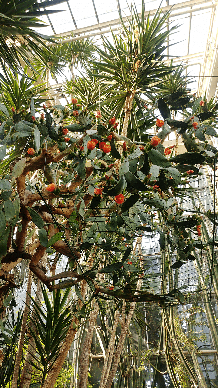 Poznańska Palmiarnia