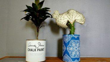 kwiaty doniczkowe oslonki 370x208 - KRÓTKI WPIS O PRZESADZANIU